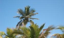 2013-03 Miami Beach Nikki Beach 5