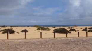 Fuertaventura - Dana and Wild-6