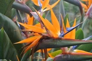 Jardim Botanico - Madeira - Dana and Wild - 5