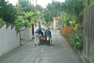 Schlittenfahrt auf Madeira - Dana and Wild-3